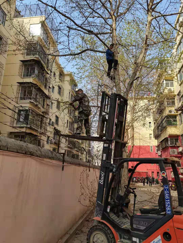 物业公司修剪树木获职工赞扬